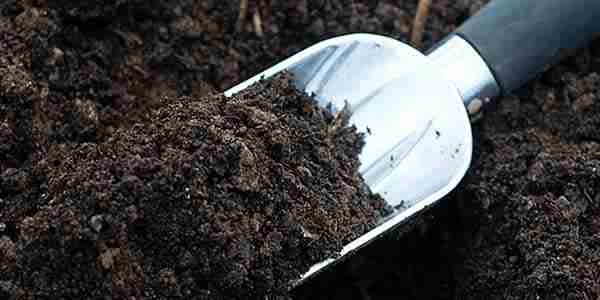 خاک مناسب روف گاردن