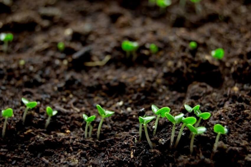 انواع خاک مناسب روف گاردن