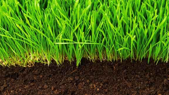 خاک و محیط کشت