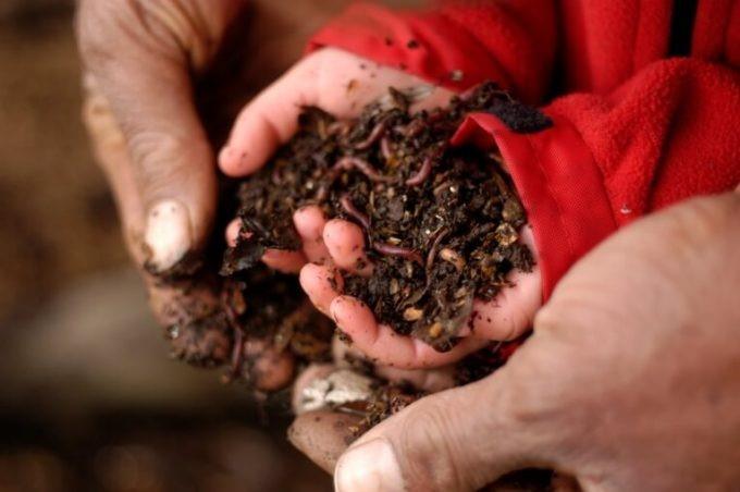 انواع خاک مناسب روف گاردن:
